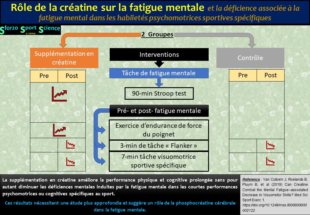 Rôle de la créatine sur la fatigue mentale